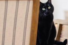 Tellulah-cat