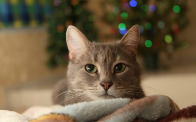 New Year's Resolutions for Your Pets