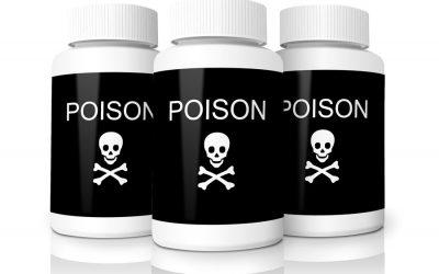 The Hazards of Pesticides & Pets