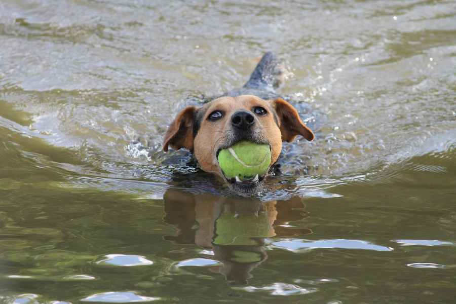 Swimming Safety for Your Dog