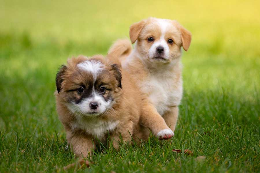 The 10 Most Important Things to Teach A Puppy