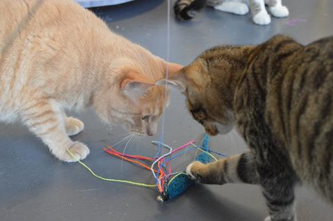 2 cats playing with a toy