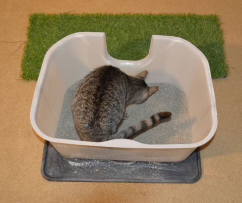 Cat in a clean litter box